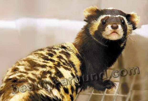 Перевязка фото животных из которых делают меховые изделия