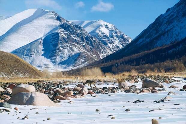 Снежный барс: легенда гор