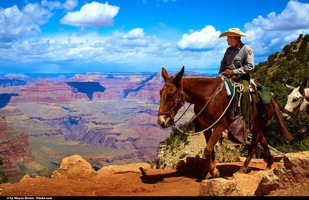 Американское население готовится к ковбойским временам: в стране нехватка боеприпасов