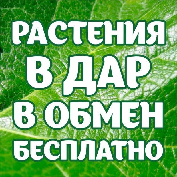 Растения в дар, в обмен, бесплатно!