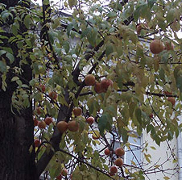 В Москве начался сезон грейпфрутов