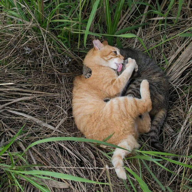 Кошачьи обнимашки.