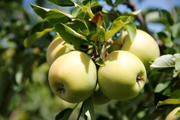 В Краснодарском крае увеличилось производство плодово-ягодной продукции