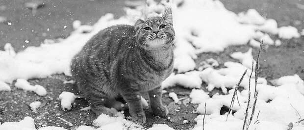 Тихо кружась 💖, с неба падал холодный снег...
