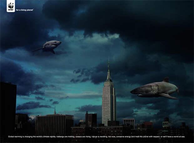 WWF: скоро вместо нас здесь будут акулы