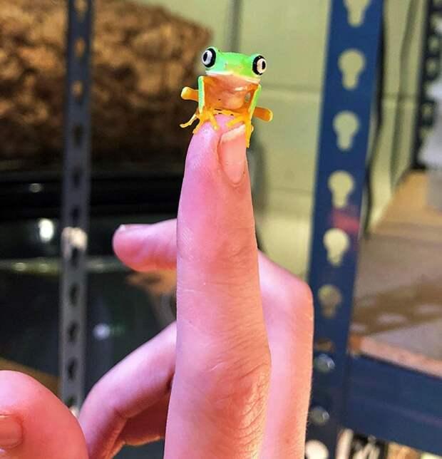 14 самых милых фото очень маленьких животных, которые помещаются на пальцах