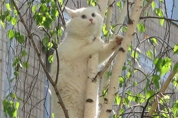 Как снять кота с дерева (лайхак)