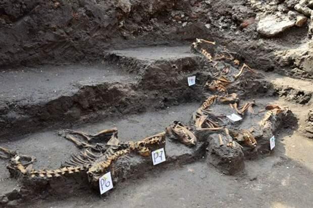 В Аскапоцалько (Мехико) найдено древнее захоронение 12 собак