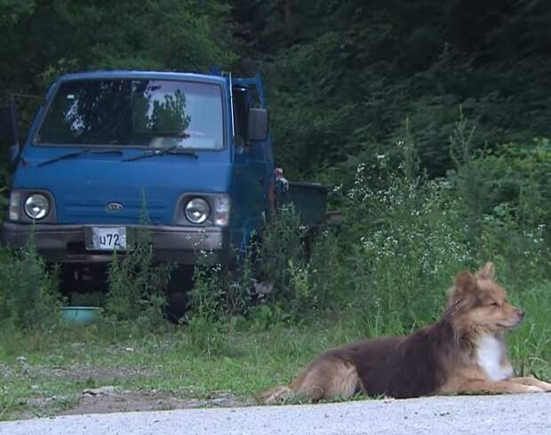 Собака и машина