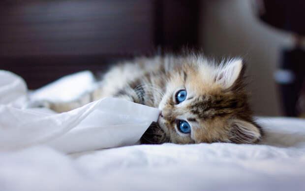 Можно ли спать с кошкой в одной постели
