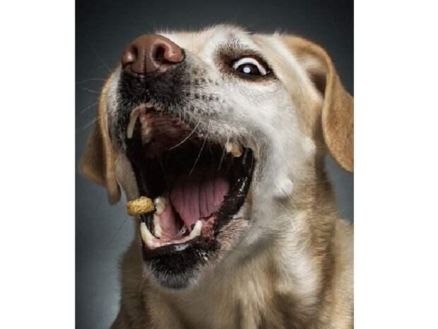 10 зворушливих моментів, коли собака виглядає емоційно - фото 3