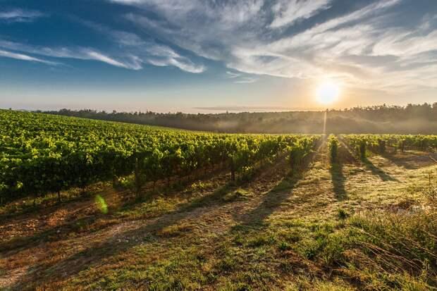 Правительство России  утвердило территориальное деление виноградопригодных земель Крыма