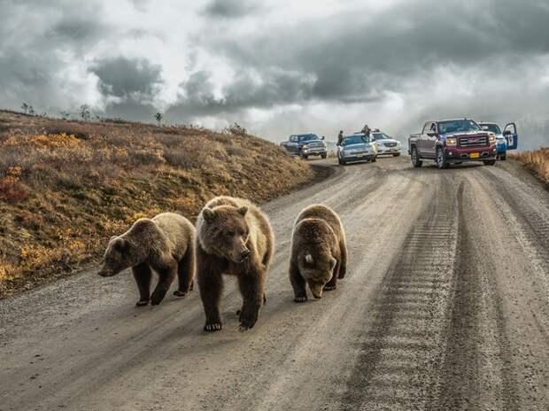 15 лучших кадров января от National Geographic