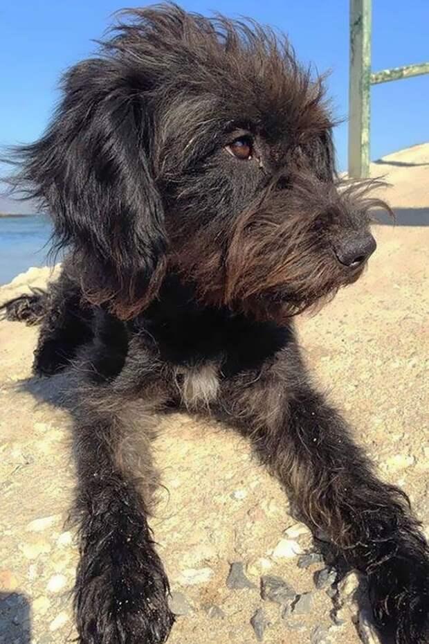 Эта собака спасла девушку от нападения