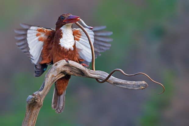 NewPix.ru - Птицы от Яки Зандер