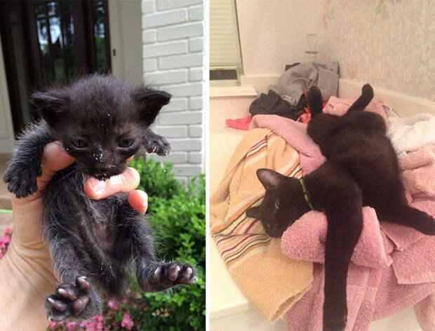 Выжившие кошки, которых спасли и полюбили: фото до и после