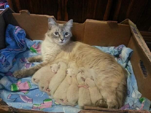 Новорождённые очаровашечки.