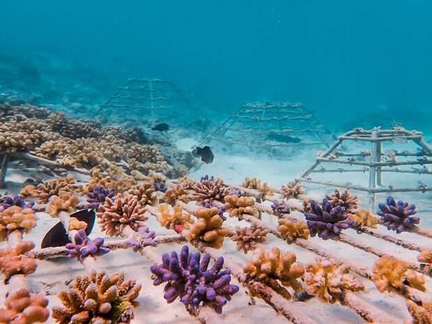 Как курортный спа-отель занимается спасением коралловых рифов и сохранением морской среды