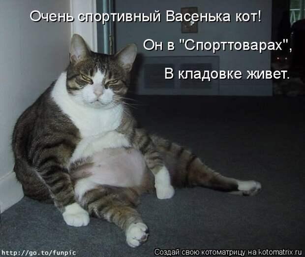 """Котоматрица: Очень спортивный Васенька кот! Он в """"Спорттоварах"""", В кладовке живет."""