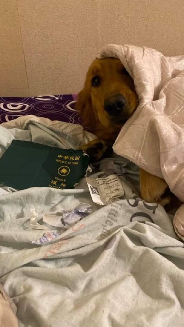 Собака сгрызла паспорт хозяйки и, тем самым, спасла её от возможной болезни