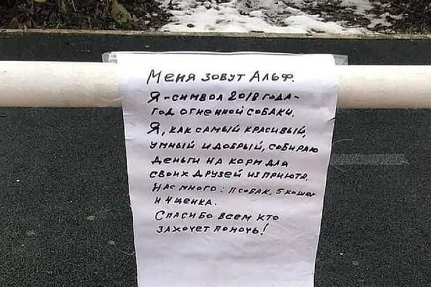 Объявление, висящее рядом с псом-попрошайкой Фото: Социальные сети