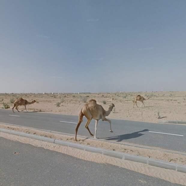 Виртуальная путешественница отыскивает необычные панорамы при помощи сервиса Google Street View
