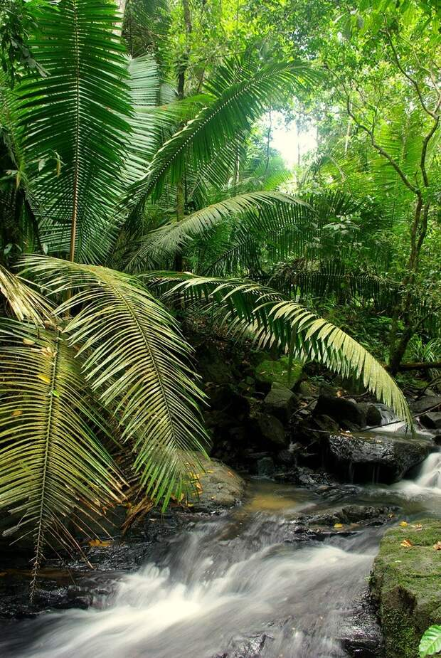 Amazonas35 Большое фотопутешествие по лесам Амазонки