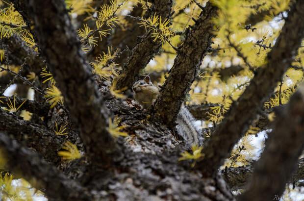 Невероятная красота осенних Саян.