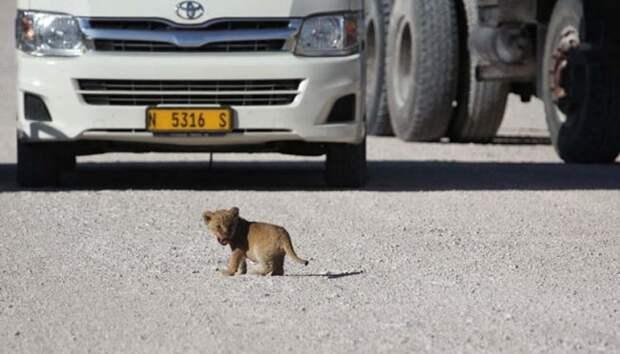 http://lol54.ru/uploads/posts/2012-08/thumbs/1345201912_lol54.ru_lion-3.jpg