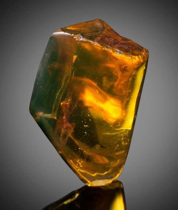 Артефакт, которому 12 миллионов лет