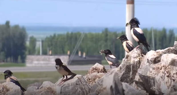 Компания готова потерять 9,5 млн рублей ради птиц