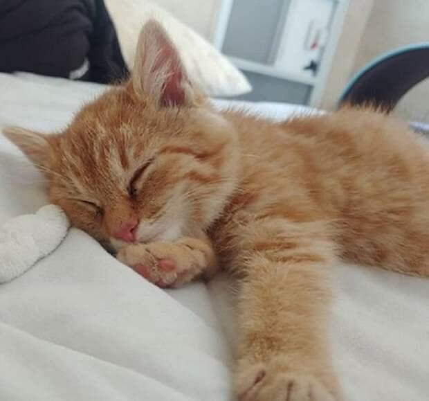 Котенок уснул