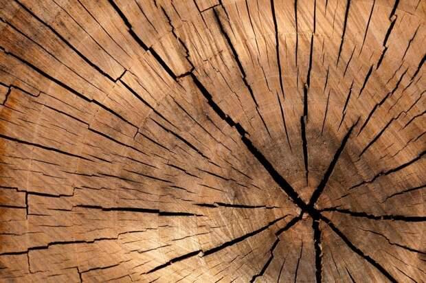 Во время ночного ливня в Путевом проезде упало дерево
