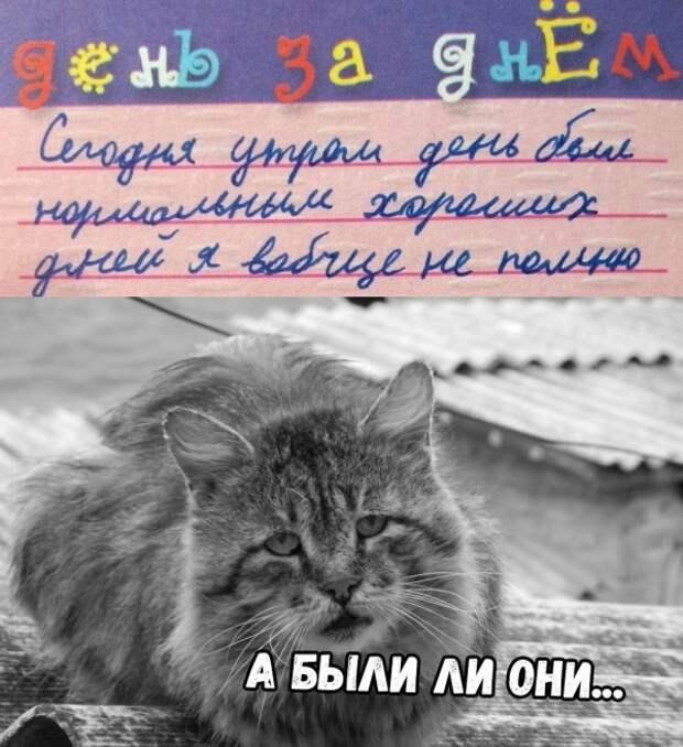 Подборка смешных картинок и веселых фото с надписями