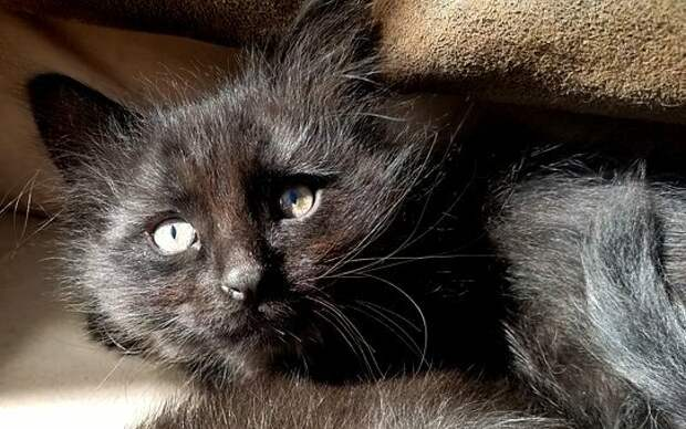 Котята на выбор. Красивая кошечка и страшненький кот – кого выберут, почти очевидно