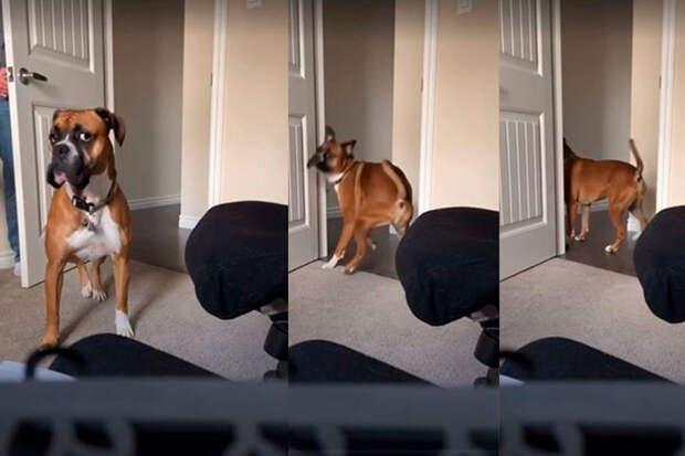 Игра пса схозяином впрятки рассмешила соцсети