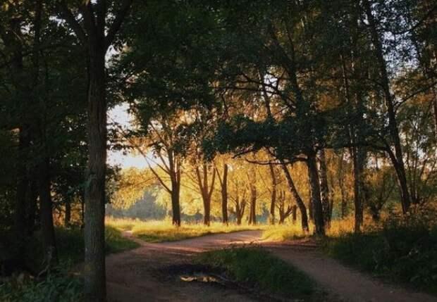Тимирязевский лес правильнее называть «Лесная дача»