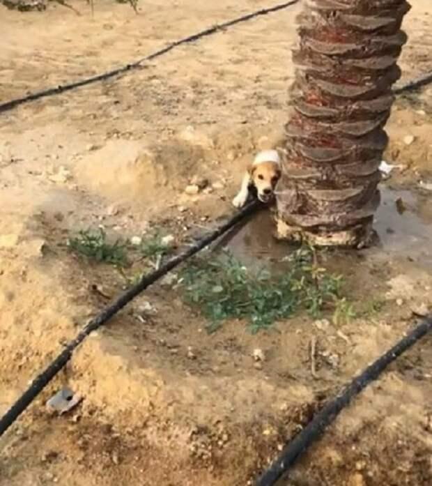 Услышав «плач» бездомного щенка, мужчина остановился, чтобы узнать, в чем дело