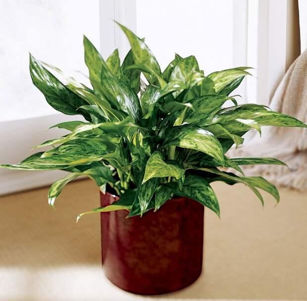 12 домашних растений, которые отлично чувствуют себя в темном углу