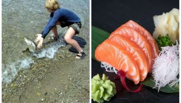 Ученики японских школ выращивают рыбу, а потом решают, съесть ее или выпустить вокеан