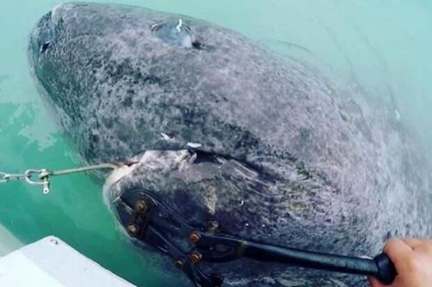 Рыбалка обернулась настоящим кошмаром: из воды на людей взглянуло древнее чудовище