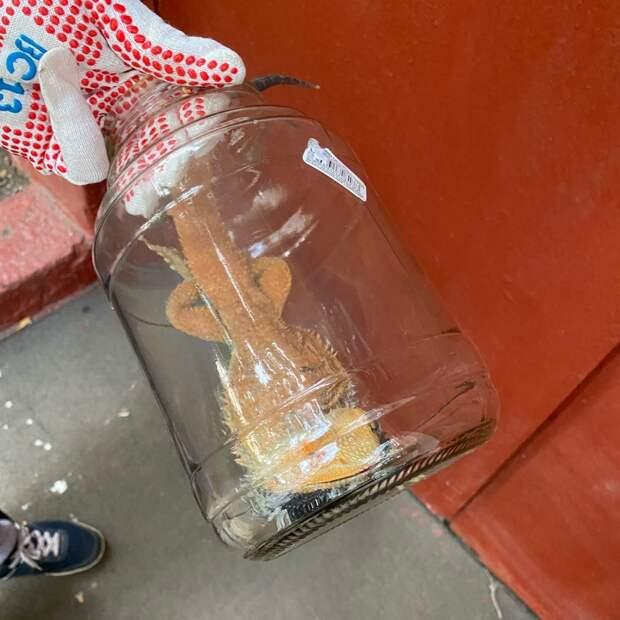 Экзотическую ящерицу нашли в банке на Карамышевской набережной