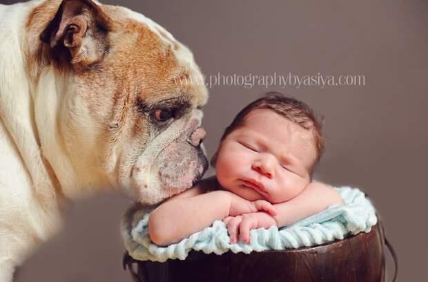 младенцы и собаки первая фотосессия (16)