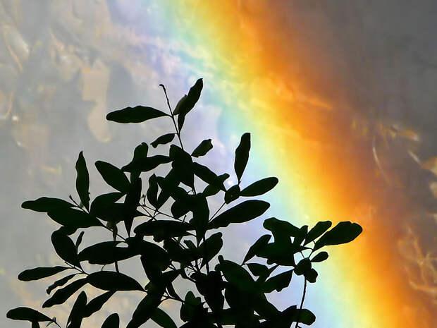 rainbow20 Радуга над самым большим водопадом в мире