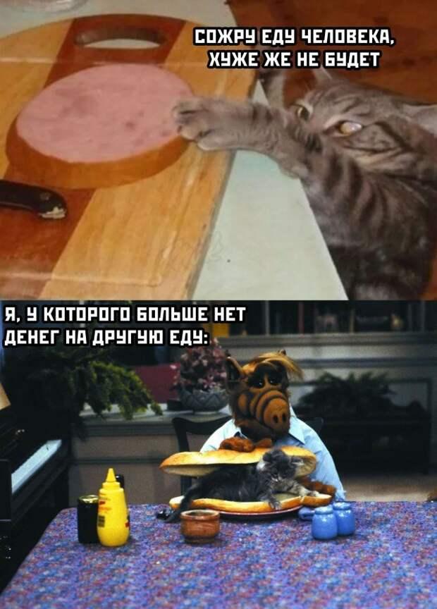 Кот ворует еду со стола