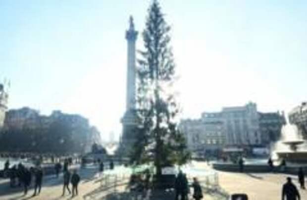 Главную елку Лондона высмеяли в соцсетях