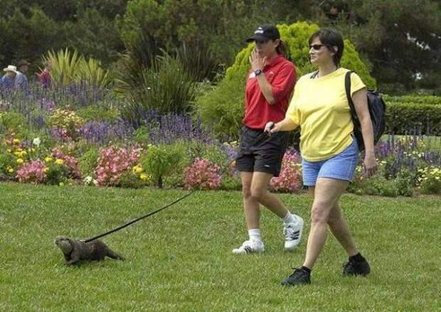 strange pet walking02
