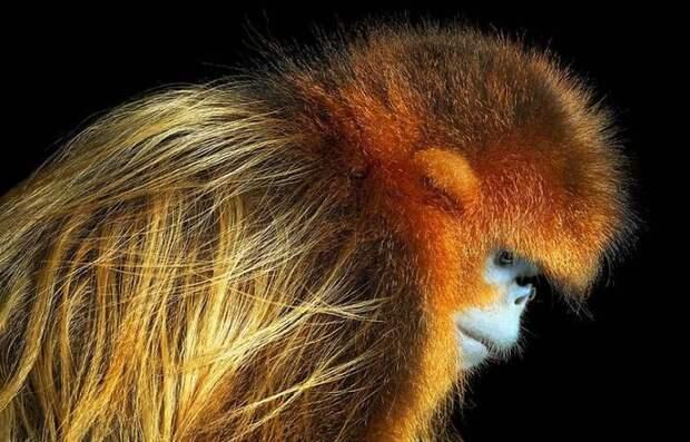 Я фоткал вымирающих животных 2 года. Ни одного из этих видов больше нет!