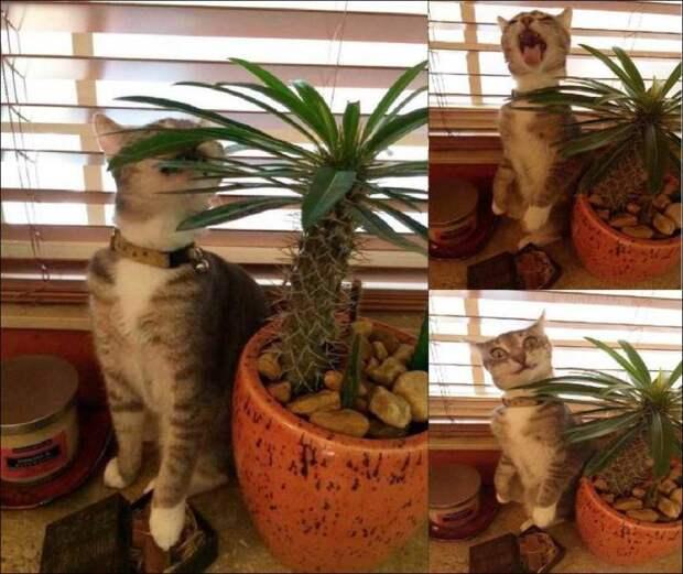 Кот и кактус