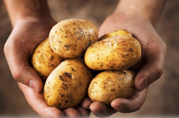 Малоизвестные овощи, созревающие в апреле: молодая картошка и спаржа